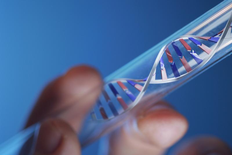 DNR kodu parašyta pirmoji        knyga