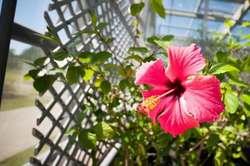 Vakaronę Europos politikams siūloma rengti VU Botanikos sode