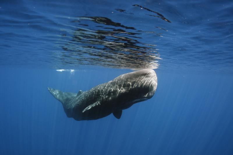 """Banginių komunikacijai trukdo """"akustinis vandenynų triukšmas"""""""