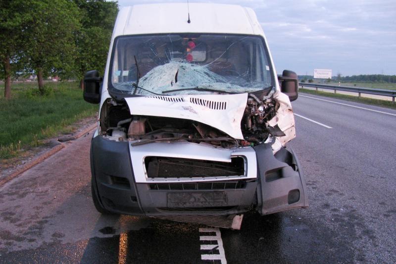 Draudikai: keliuose avarijas dažniausiai sukelia stirnos