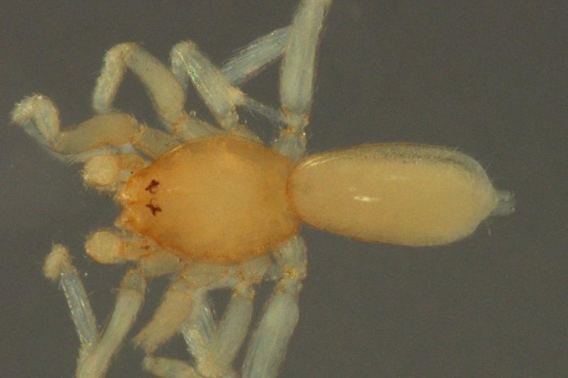 Nauja vorų rūšis pavadinta filmų apie gamtą žvaigždės vardu