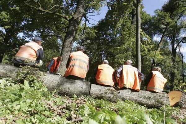 Dėl medžių pjovimo darbų Vilniaus gatvėse bus ribojamas eismas