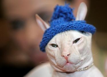 Olandei teismas uždraudė auginti 60 kačių