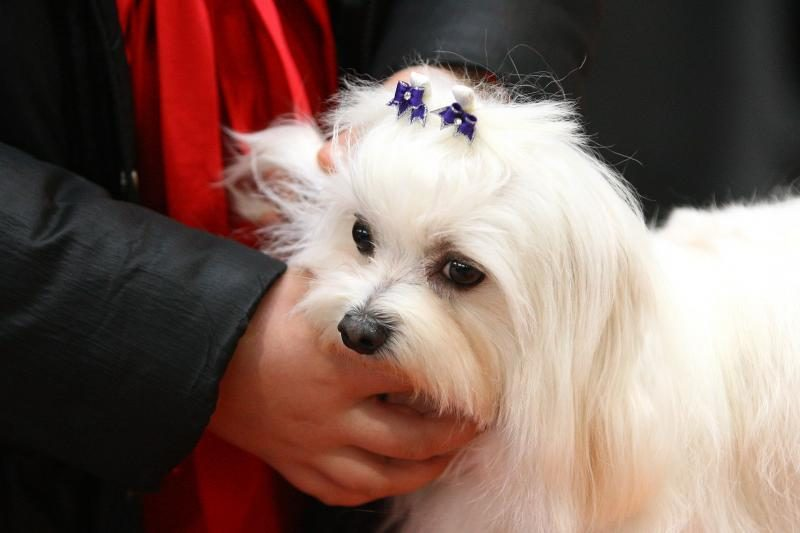 Akademijos miestelis sukvietė šunų mylėtojus