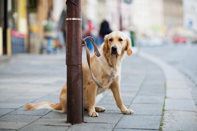 Uostamiestyje vagys nusitaikė į šunis