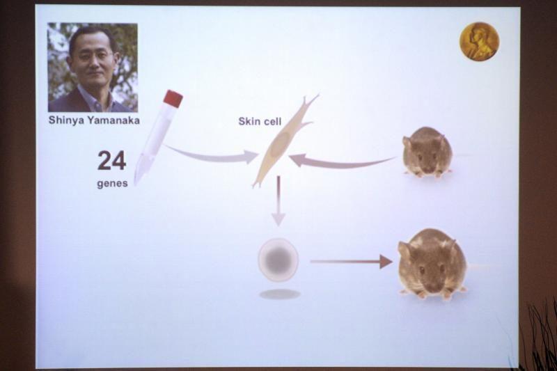 Nobelio medicinos premija paskirta už kamieninių ląstelių tyrimus
