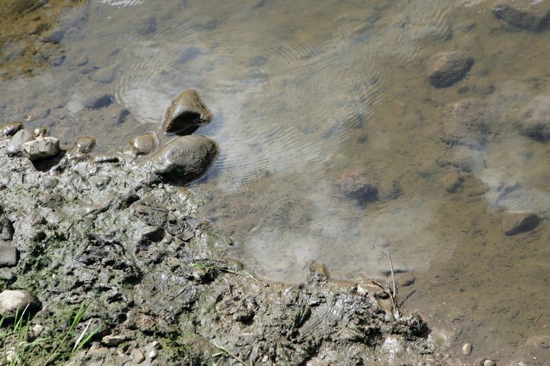 Gyventojai skambina pavojaus varpais: gelbėkite Jiesios upę