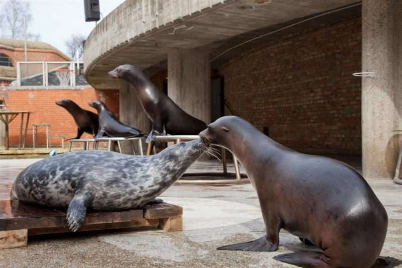 Muziejininkų išaugintas ruoniukas - nauja pasirodymų žvaigždė