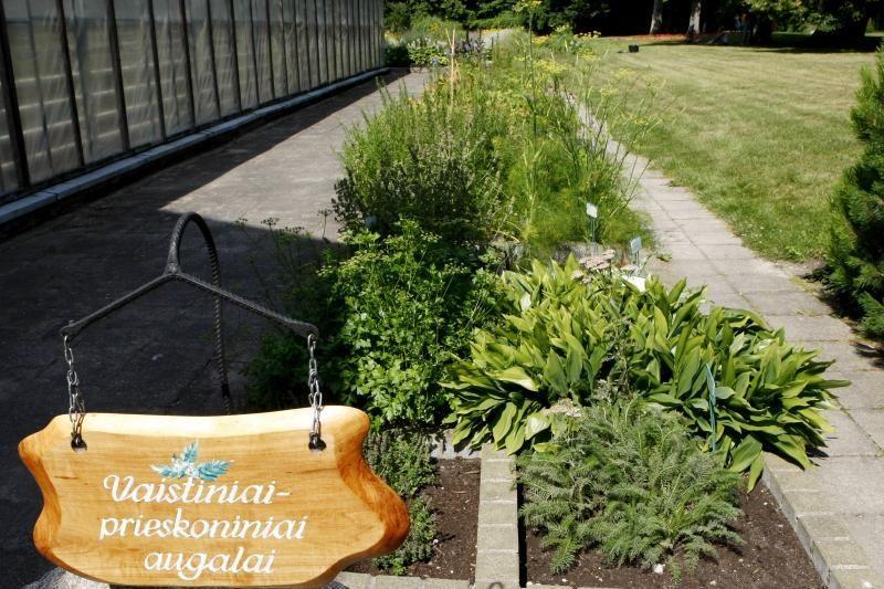 Surikiuoti Palangos Botanikos parko rekonstrukcijos darbai