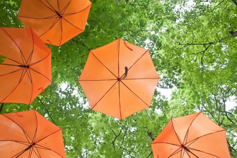 Sinoptikė: rytiniuose rajonuose numatomas lietus