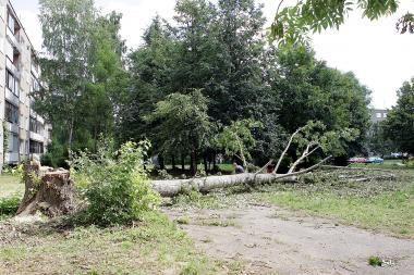 Stiprus vėjas pajūryje vartė medžius