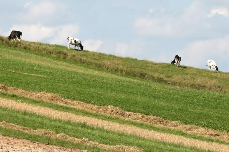 Per parą Kauno apskrityje – 23 vagystės: dingo ir karvės, ir dviratis