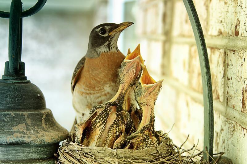 Pagalba Lietuvoje žiemojantiems paukščiams – lesyklomis ir inkilais