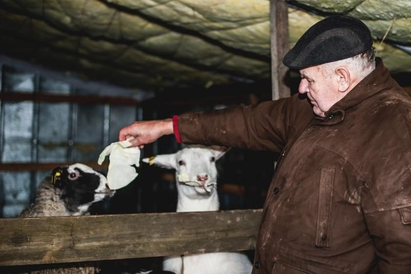 Laiminga pabaiga: išgelbėtos nutrijos iškeliavo į ūkininkų sodybas