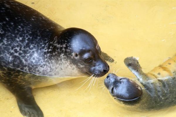 Jūrų muziejuje – du nauji gyvūnai