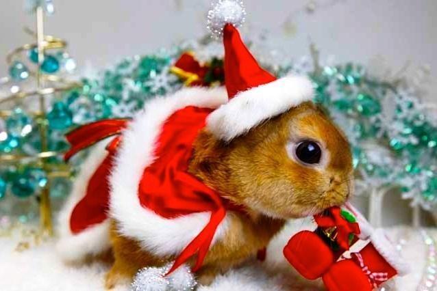 Kaip Kalėdoms papuošti naminius gyvūnus?