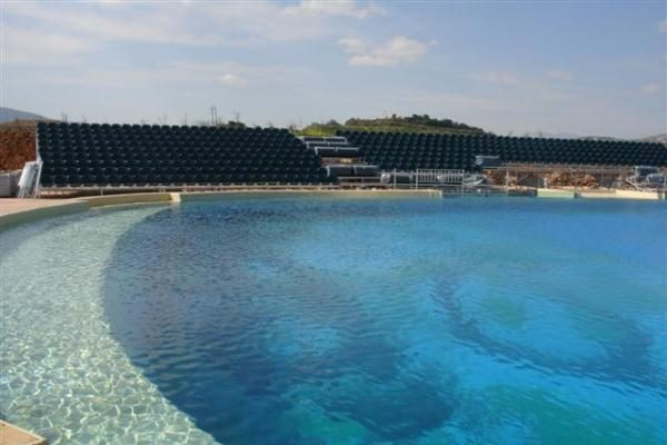 Klaipėdos delfinai Graikijoje jaučiasi puikiai
