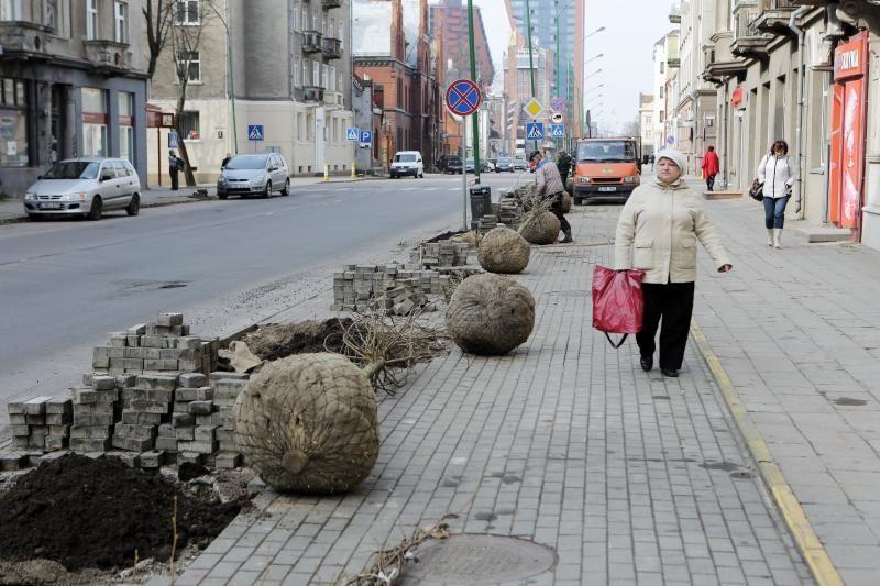 Liepų gatvėje sodinami nauji medeliai