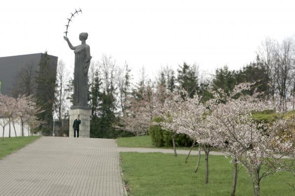 Vilniuje pražydo sakuros