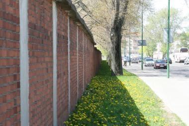 Regata griauna Klaipėdos sienas