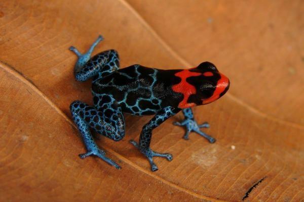 Amazonėje vis dar atrandama įspūdingų gyvūnų rūšių