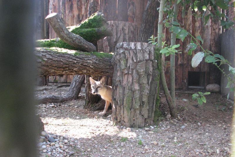 Zoologijos sodo gyvūnai laukia žmonių pagalbos