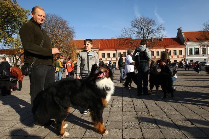Rekordinėje gyvūnų eisenoje Kaune dalyvavo ir erkė