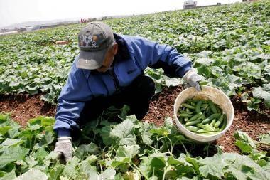Kreivi agurkai ir gumbuotos morkos grįžta į ES parduotuves