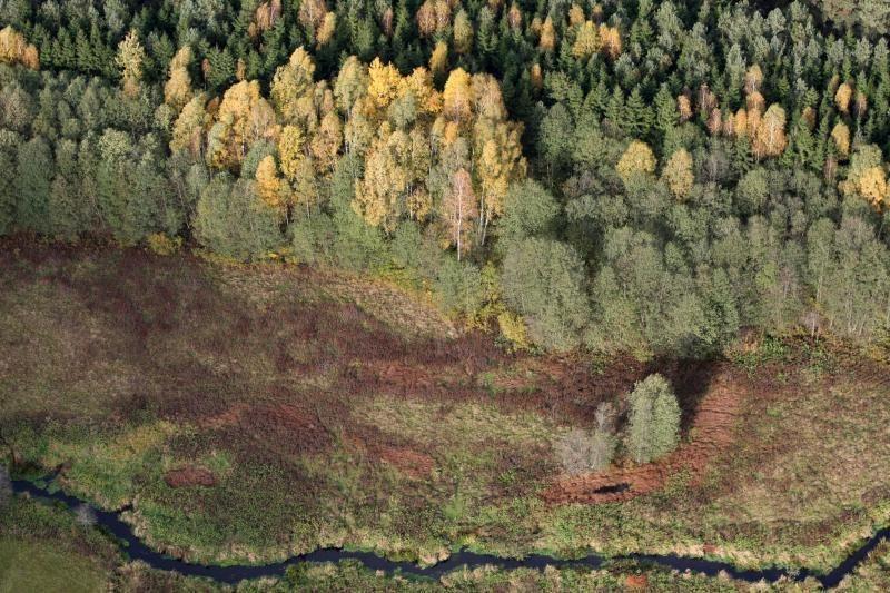 Dėl piktnaudžiavimo grėsmės siūlo stabdyti valstybinių miškų pardavimą