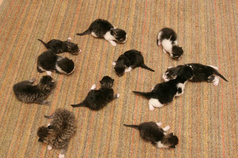 Gyvačių augintojai nusitaikė į benames kates
