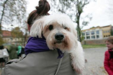 Mokslininkai: šunys gali būti ir optimistai, ir pesimistai