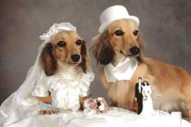 Britanijoje bus surengtos šunų vestuvės