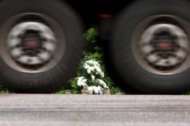 Vilkikas sumaitojo į gatvę išėjusį vyrą, vairuotojas paspruko
