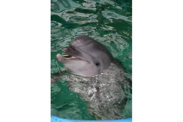 Jūrų muziejaus delfinai skris į Graikiją