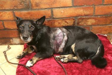 Kleboniškio miške rastas nudirtas šuniukas sveiksta