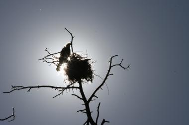 Ar kormoranai yra vertybė?