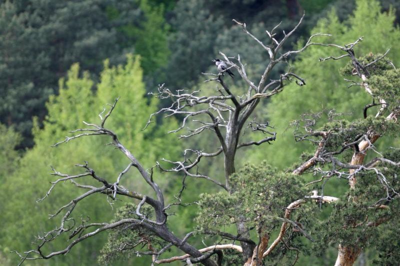 Kretingos rajono miške medžiotojai išbaidė brakonierius