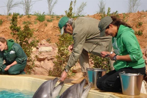 Delfinai jau apsipranta Graikijoje