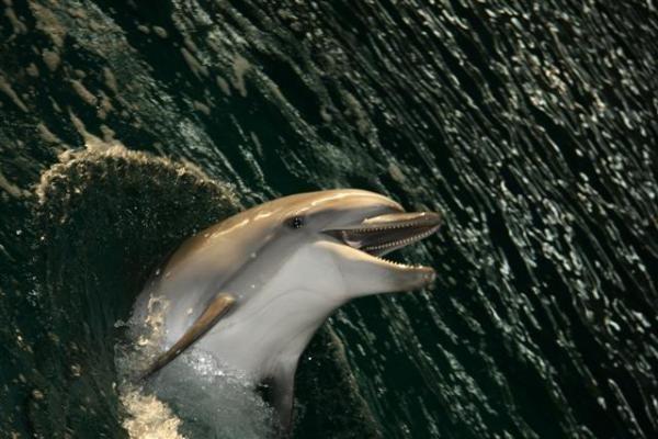 Delfinai išmoko vaikščioti ant vandens