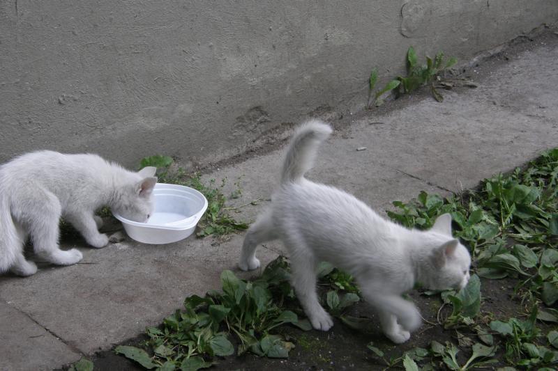 B.Bardot fondas skyrė lėšų benamių kačių sterilizacijai