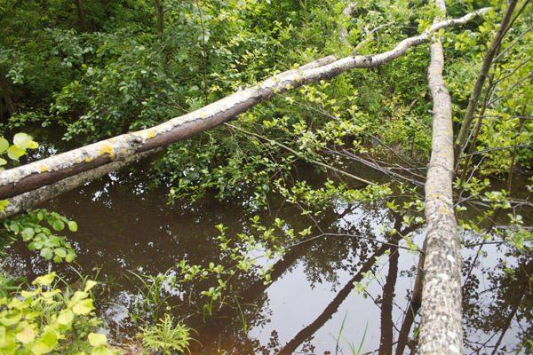 Varėnos rajono miške rastas kauniečio lavonas