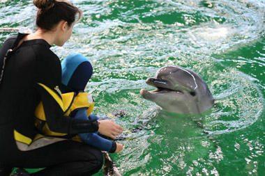 LNK transliuos atsisveikinimą su Lietuvos delfinais