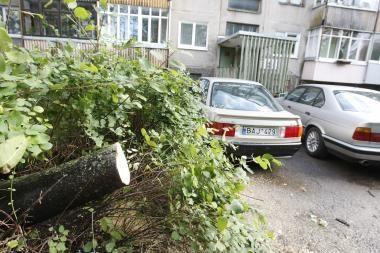 Už audros padarinių pašalinimą Klaipėdoje – 8 tūkst. litų