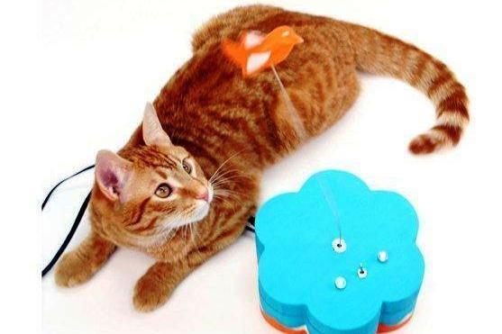 Nuostabios katės: greitos, stiprios, vikrios