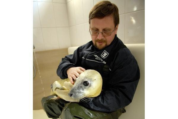 Jūrų muziejuje gimė ruoniukas