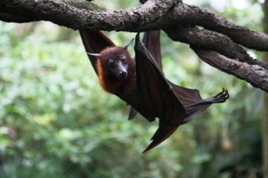 200 tūkst. šikšnosparnių tapo benamiais
