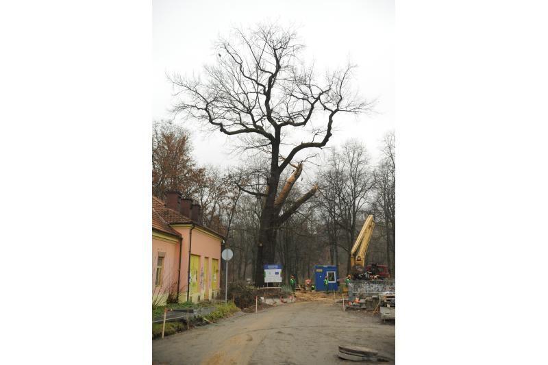 N.Zvonkė prašėsi į O.Pikul pamerges