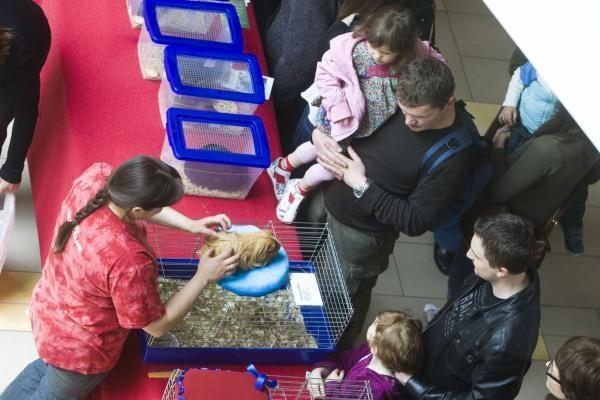 Vilniuje – kilmingų dekoratyvinių graužikų paroda