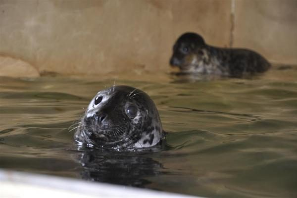Jūrų muziejaus ruoniukams trūksta vardų