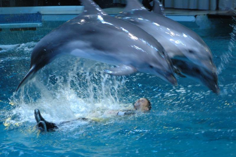 Lietuvos delfinai Graikijoje susilaukė mažylio (papildyta)